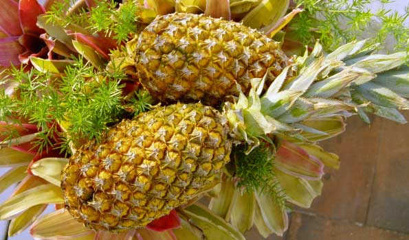 Ananas von Fine Fruits Club